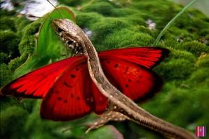jaszczurka-motyl
